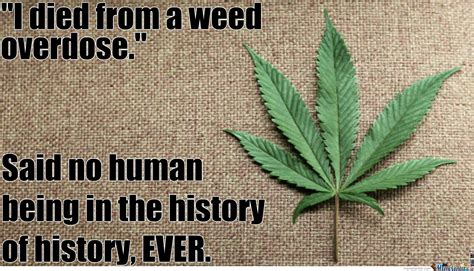 Marijuana Overdose Meme - quot i died from a weed overdose quot said no one ever