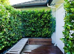 die besten 17 bilder zu hecke auf pinterest garten With katzennetz balkon mit vertical garden online