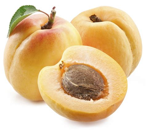 Apricot Is Toxic To Dogs   Pet Poison Helpline