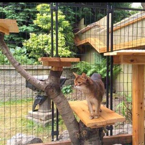 safe  smartly organized outdoor cat areas diy cat