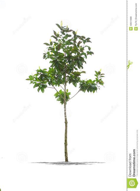 tuin definitie mooie groene boom op een witte achtergrond in hoge