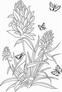 4 Schmetterlinge Auf Blume Ausmalbild Malvorlage