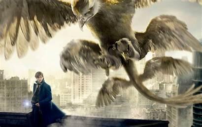 Beasts Fantastic Thunderbird Newt Them Scamander Wallpapers