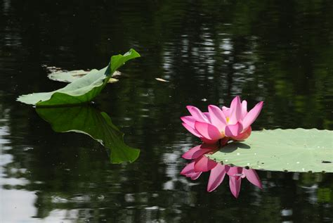 The Water Gardens by Lotus Flower
