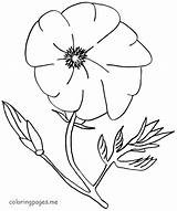 Poppy Coloring Flower Flowers Colouring Drawing Printable Sheets Template Coloringhome Library Clipart Clip Getdrawings Popular sketch template