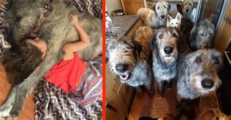 goofy dog stories smile breed