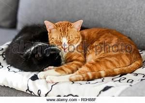 Kuscheln Auf Englisch : junges paar kuscheln auf dem sofa zu hause stockfoto bild 278891604 alamy ~ Eleganceandgraceweddings.com Haus und Dekorationen