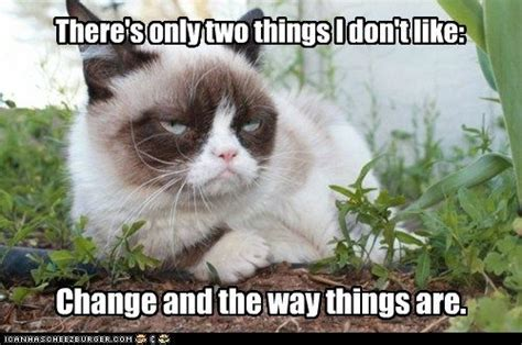 Tard The Cat Meme - 513 best images about grumpy cat tard on pinterest