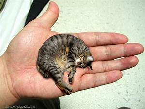 10 of the World's Smallest Animals - FunCage