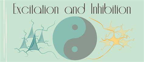 excitation  inhibition  yin     brain