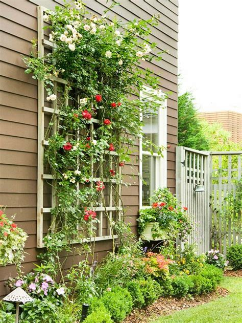 plante dans chambre les plantes grimpantes beaucoup d 39 idées pour le jardin