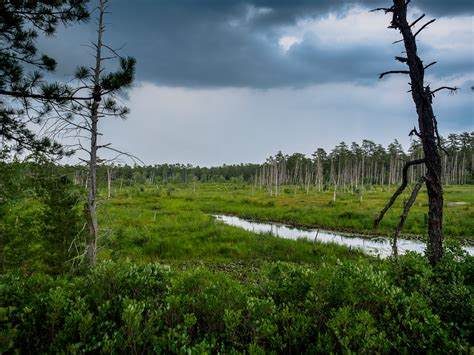dead forest island