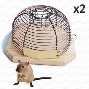 Produit Pour Tuer Les Souris : anti souris pi ge petite cage lot de 2 traitement anti insectes et souris ~ Melissatoandfro.com Idées de Décoration