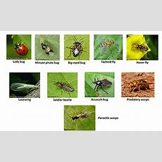 Increasing Beneficial Insects For Enhanced Pollination And