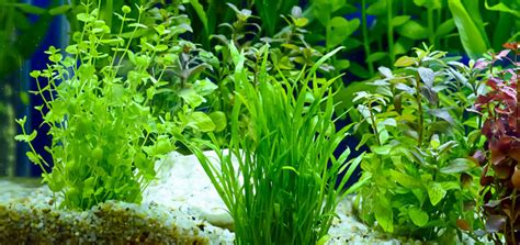Best Substrate For Aquascaping by Best Aquarium Substrate For Planted Tanks 2019 Guide