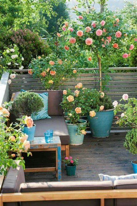 Climbing Roses In Pots  Garden  Outdoor Space