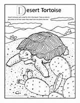 Desert Tortoise Coloring Neocoloringpages Sulcata Tortoises Animal sketch template