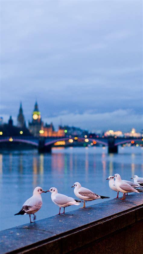 seagulls  london iphone   hd wallpaper hd
