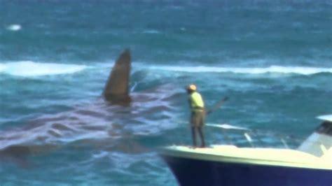 megalodon shark caught  tape   evidence rare