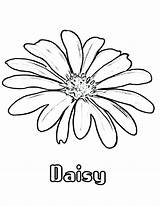 Daisy Coloring Flower Drawing Flowers Printable Colouring Daisies Drawings Simple Draw Getdrawings Colornimbus Marigold sketch template