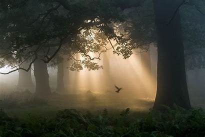 Birds Trees Forest
