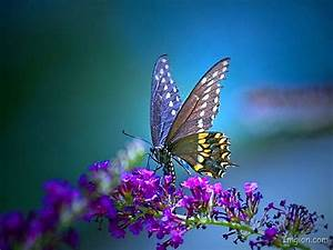 Butterfly, Hd, Wallpaper