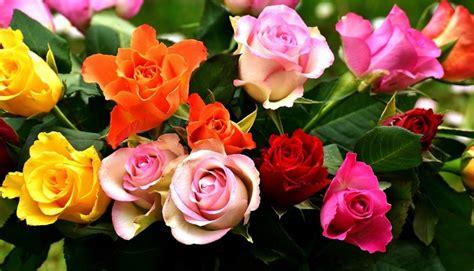 We did not find results for: √ 59+ Kumpulan Aneka Gambar Bunga Mawar dan Jenisnya Terlengkap
