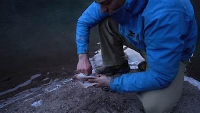 Fish Skin Gut Steps Easy Wild West
