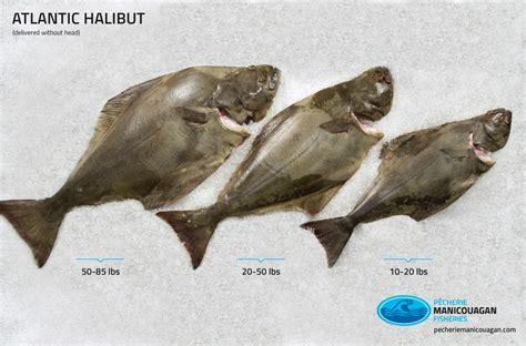 atlantic halibut distributor pecherie manicouagan quebec