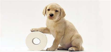 the 4 crucial principles for housetraining any at any age urdogs