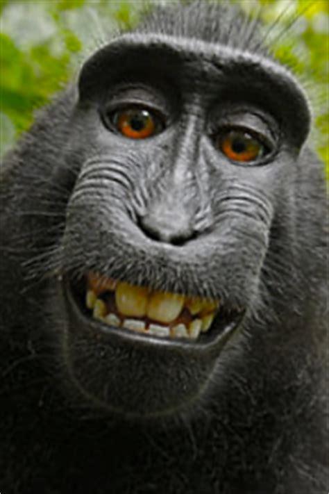 le bureau de controle selfie singe domaine droits d 39 auteur