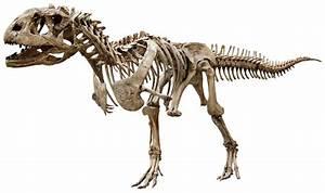 The Atlantean Conspiracy: Dinosaur Hoax - Dinosaurs Never ...