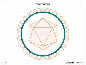 Virus Diagram Illustrations