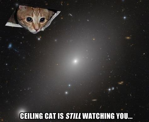 Ceiling Cat Meme - 371 best images about puss in bread on pinterest cats maze and know your meme