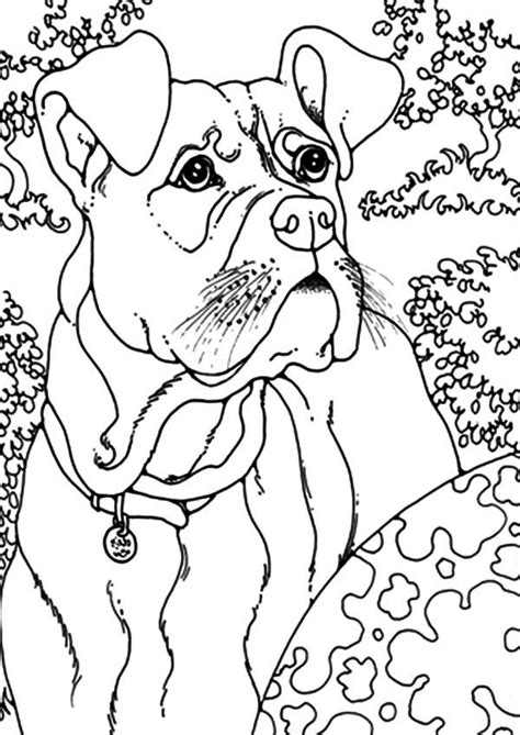boxer dog play  coloring pages  place  color