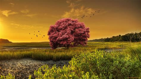 Photo Collection Tree Landscape Wallpaper