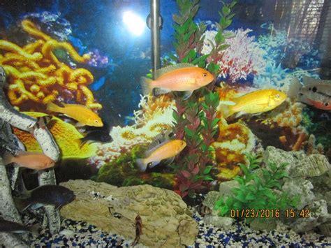 Aquarium Fish pH Levels