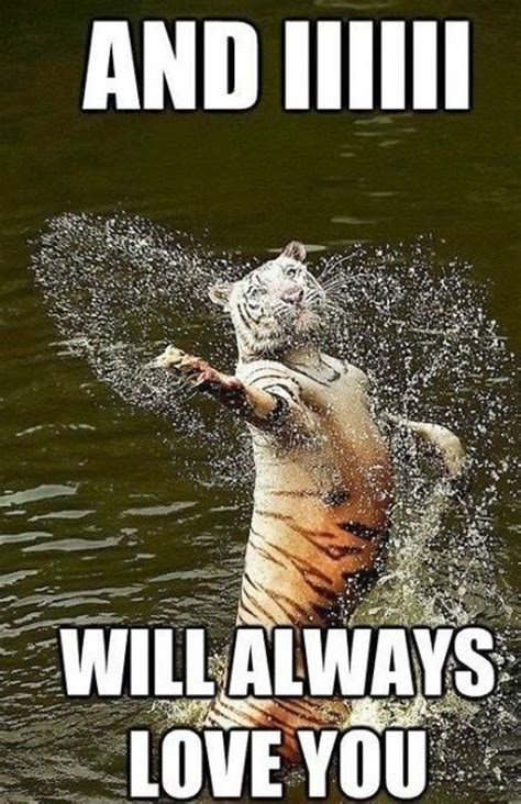 Funny Tiger Memes - singing tiger meme funny pictures quotes memes jokes