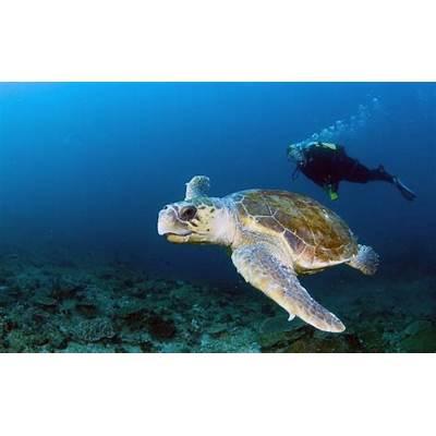 Dive The Bazaruto ArchipelagoOriginal Diving