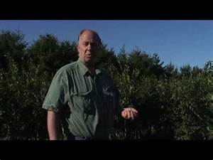 Super-Organic Blueberries Nutrition from healthy soil ...