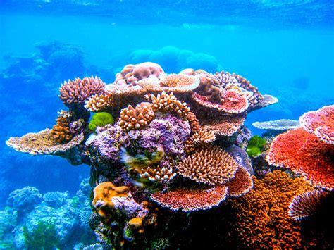 Mappata La Grande Barriera Corallina Australiana