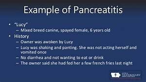 pancreatitis in canines