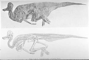 1000+ images about Dinosauricon C : Corythosaurus on ...