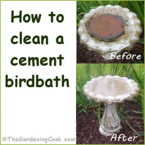 how to clean a cement bird bath the gardening cook