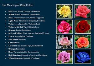 Awesome Quotes: The Meaning Behind a Flower's Color