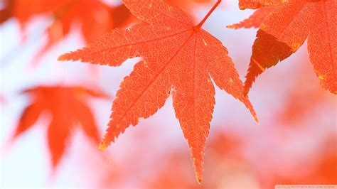 Orange Leaf Wallpaper by Orange Leaves 3 Wallpaper 1920x1080 Wallpoper