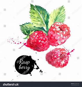 Hand Drawn Watercolor Painting Raspberry On Stock Vector ...