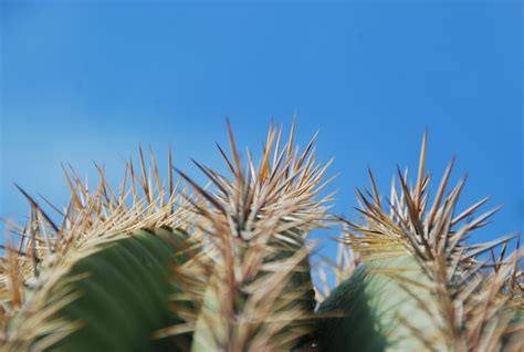 desertsouthwest: Cactus spines~OUCH~Cactus Monday~072411