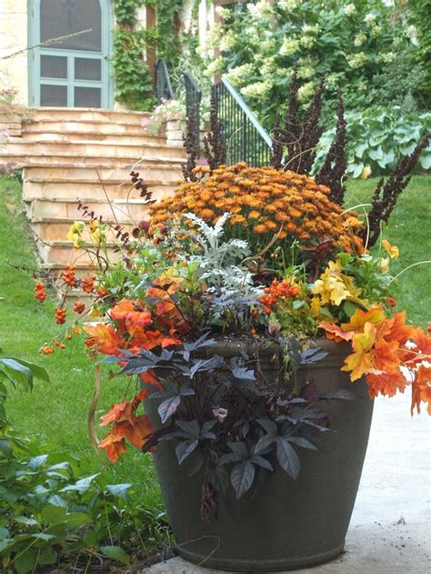 enchanting cottage garden mums  word  fall