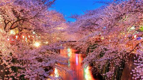 Sakura Fond D'écran Hd